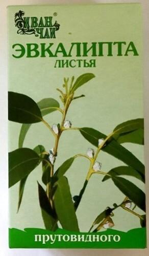Купить Эвкалипта прутовидного листья цена